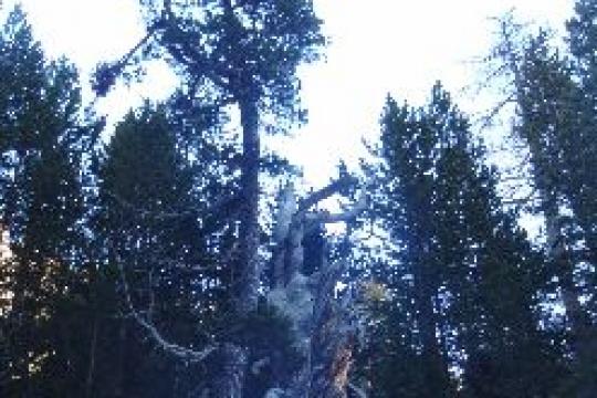 drôle d'arbre